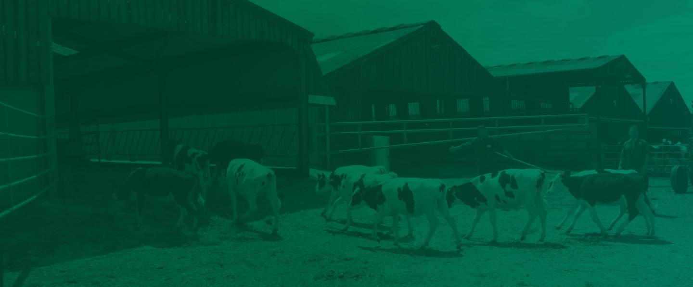 improve animal welfare